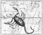 medium_scorpion.jpg